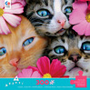 Avanti - Kittens in Flowers