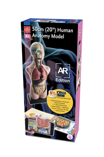 "11 piece 20"" Human Anatomy Model AR Edition picture"