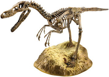 Velociraptor Skeleton picture
