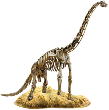 Brachiosaurus Skeleton picture