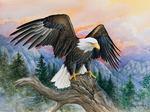 Eagle Gaze