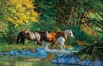 Bear Creek Crossing