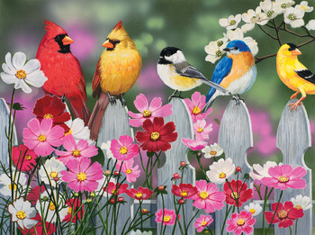 Songbirds and Cosmos picture