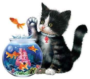 Splash picture