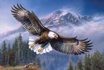 Eagle Anthem picture