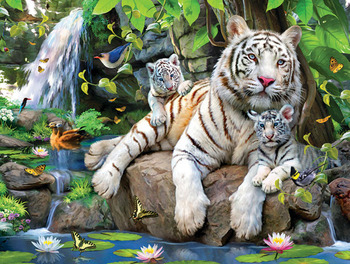 White Tigers of Bengal picture