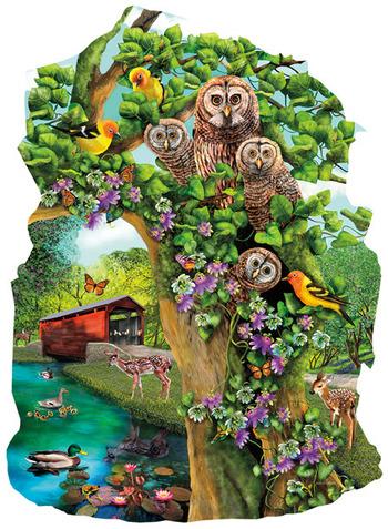 Owl Condo picture