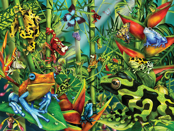 Frog Frenzy picture