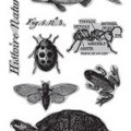 7G Cling Stamps: Nature's Kingdom