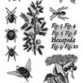 7G Cling Stamps: A Bug's Life