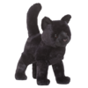 MIDNIGHT BLK CAT