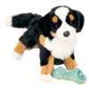 TREVOR BERNESE MTN DOG