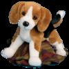 Bernie Beagle