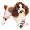 Ogilvy Springer Spaniel