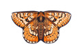 Marsh Fritillary - Natural Butterfly Wings
