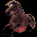 Zoe Bay Horse