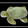 Tillie Turtle