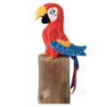 GABBY RED PARROT