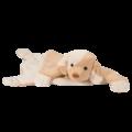 Dog Cuddle Mat
