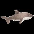 TIGER SHARK  LG