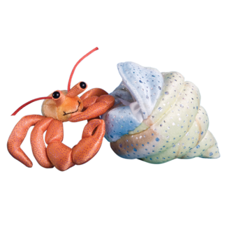 Henry Hermit Crab with Shell picture