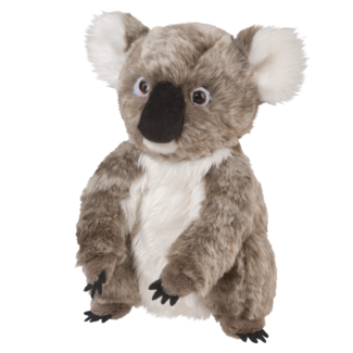 Aussie Koala picture