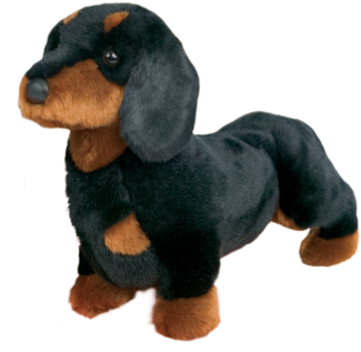 Spats Black & Tan Dachshund picture