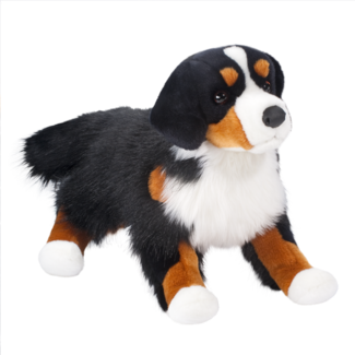 Bernese Mountain Dog picture