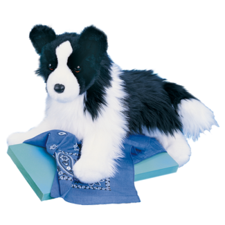 Chase Border Collie picture