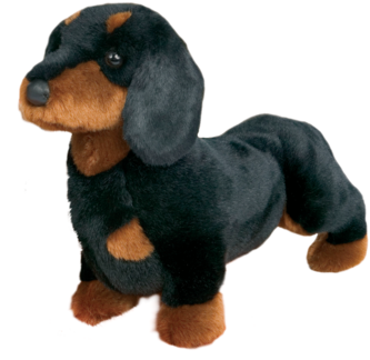 SPATS BLK & TAN DACHSHUND picture