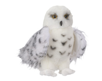 Wizard Snowy Owl picture