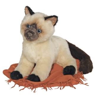 Tasha Himalayan Cat picture