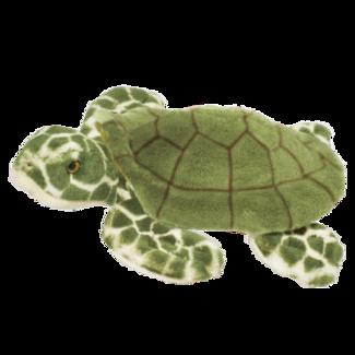 Toti Turtle picture