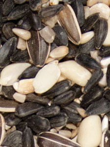 Choice Blend Bird Seed - 5 lbs picture