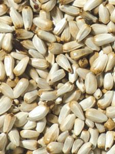 Safflower Bird Seed - 20 lbs picture