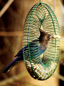 WBU Peanut Wreath Bird Feeder (green) picture