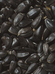 Premium Oil Sunflower Bird Seed - 5 lbs picture