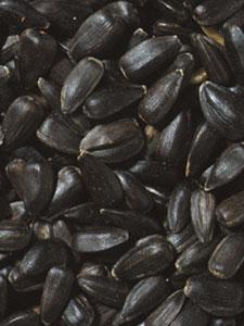 Premium Oil Sunflower Bird Seed - 5 lbs picture