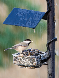 WBU APS SideDish™ Bird Feeder EZ-Attach picture