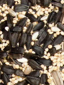 Deluxe Blend Bird Seed - 5 lbs picture