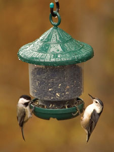 Clinger's Only™ Bird Feeder (Green) picture