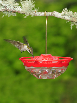 WBU Mini High Perch™ Hummingbird Feeder - 4 oz picture