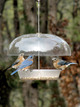 WBU Dinner Bell Bird Feeder