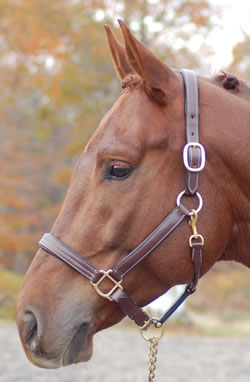 PADDED HALTER - LAINIE picture