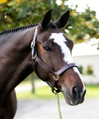 JULIE - FIXED NOSEBAND HALTER