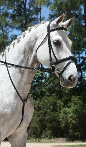 GERMAN MARTINGALE picture