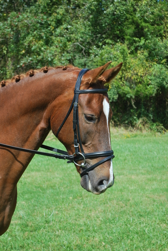 LEVADE NOSEBAND picture