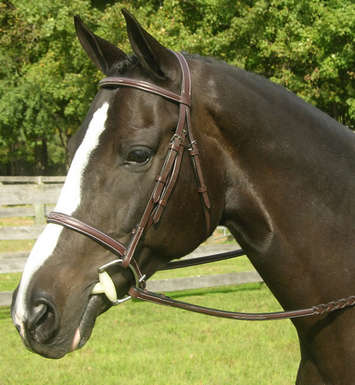 SOVEREIGN NOSEBAND picture