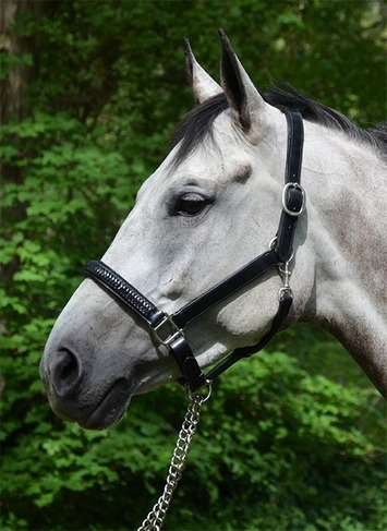 KIMBERLY PADDED HALTER-LIMITED TIME OFFER picture