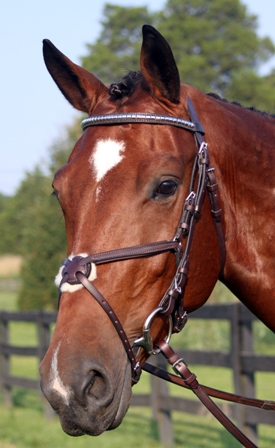 Nunn Finer Figure 8 Bridle picture